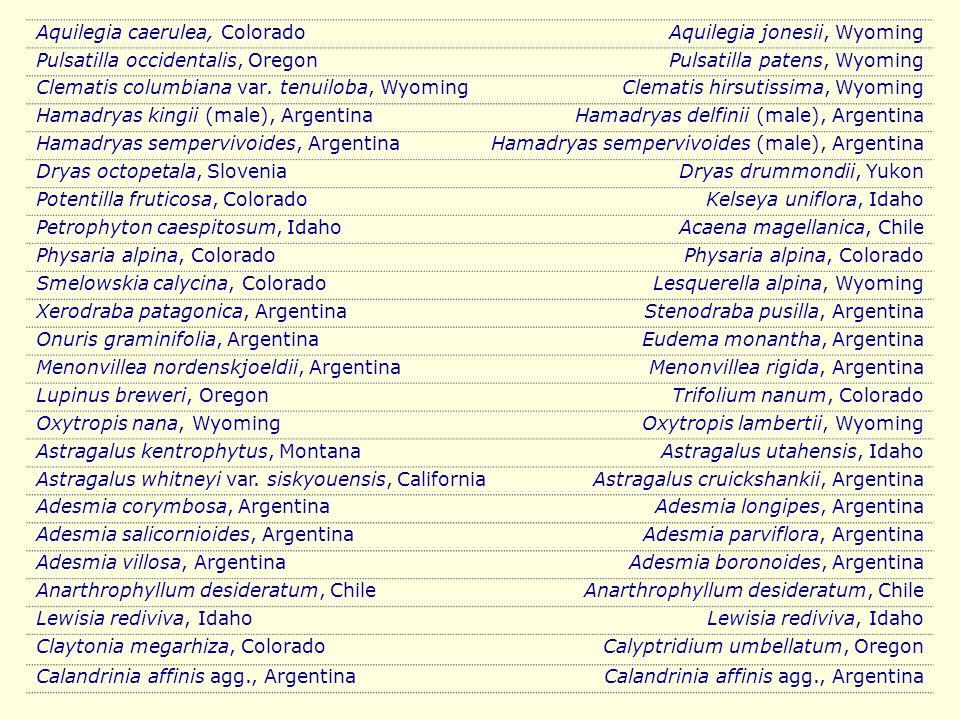 Aquilegia caerulea, ColoradoAquilegia jonesii, Wyoming Pulsatilla occidentalis, OregonPulsatilla patens, Wyoming Clematis columbiana var. tenuiloba, W