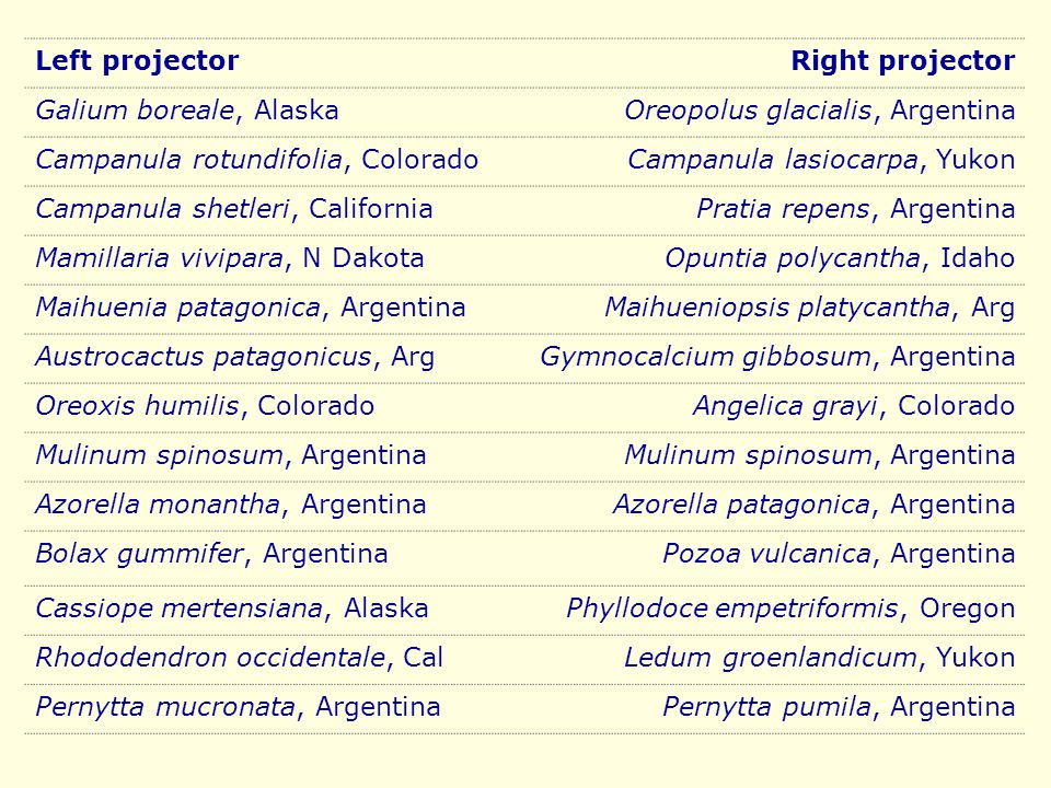 Left projectorRight projector Galium boreale, AlaskaOreopolus glacialis, Argentina Campanula rotundifolia, ColoradoCampanula lasiocarpa, Yukon Campanula shetleri, CaliforniaPratia repens, Argentina Mamillaria vivipara, N DakotaOpuntia polycantha, Idaho Maihuenia patagonica, ArgentinaMaihueniopsis platycantha, Arg Austrocactus patagonicus, ArgGymnocalcium gibbosum, Argentina Oreoxis humilis, ColoradoAngelica grayi, Colorado Mulinum spinosum, Argentina Azorella monantha, ArgentinaAzorella patagonica, Argentina Bolax gummifer, ArgentinaPozoa vulcanica, Argentina Cassiope mertensiana, AlaskaPhyllodoce empetriformis, Oregon Rhododendron occidentale, CalLedum groenlandicum, Yukon Pernytta mucronata, ArgentinaPernytta pumila, Argentina