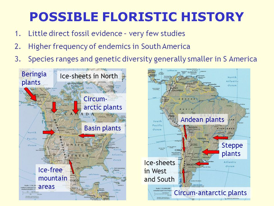 POSSIBLE FLORISTIC HISTORY 1.Little direct fossil evidence – very few studies 2.Higher frequency of endemics in South America 3.Species ranges and genetic diversity generally smaller in S America Circum- arctic plants Beringia plants Basin plants Ice-free mountain areas Andean plants Steppe plants Circum-antarctic plants Ice-sheets in North Ice-sheets in West and South