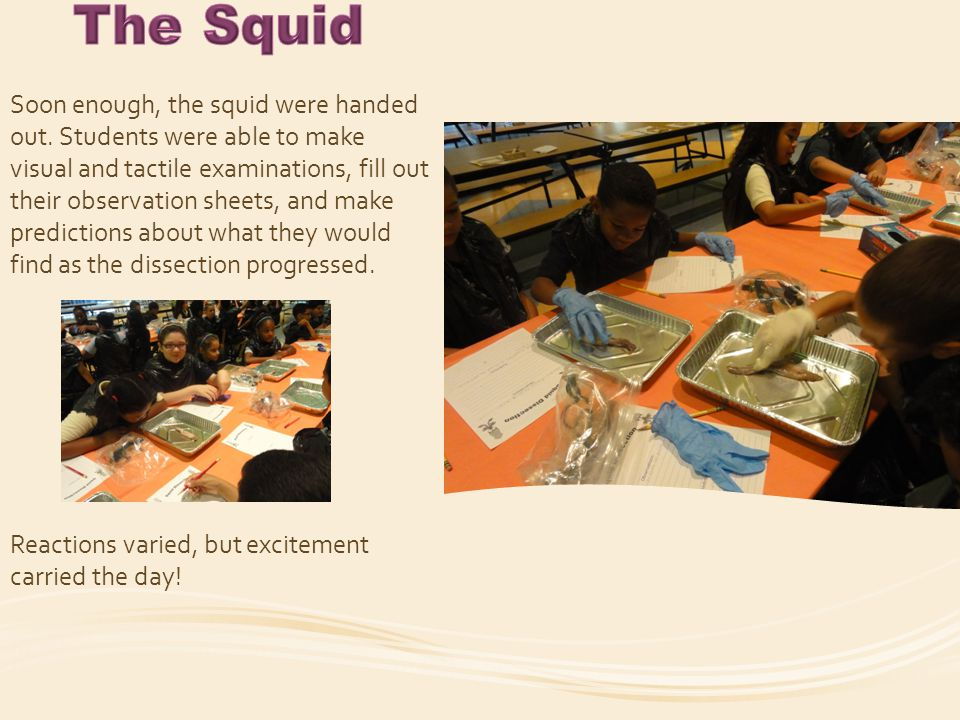 Ms.Bolio, our Squid Expert, got things rolling.