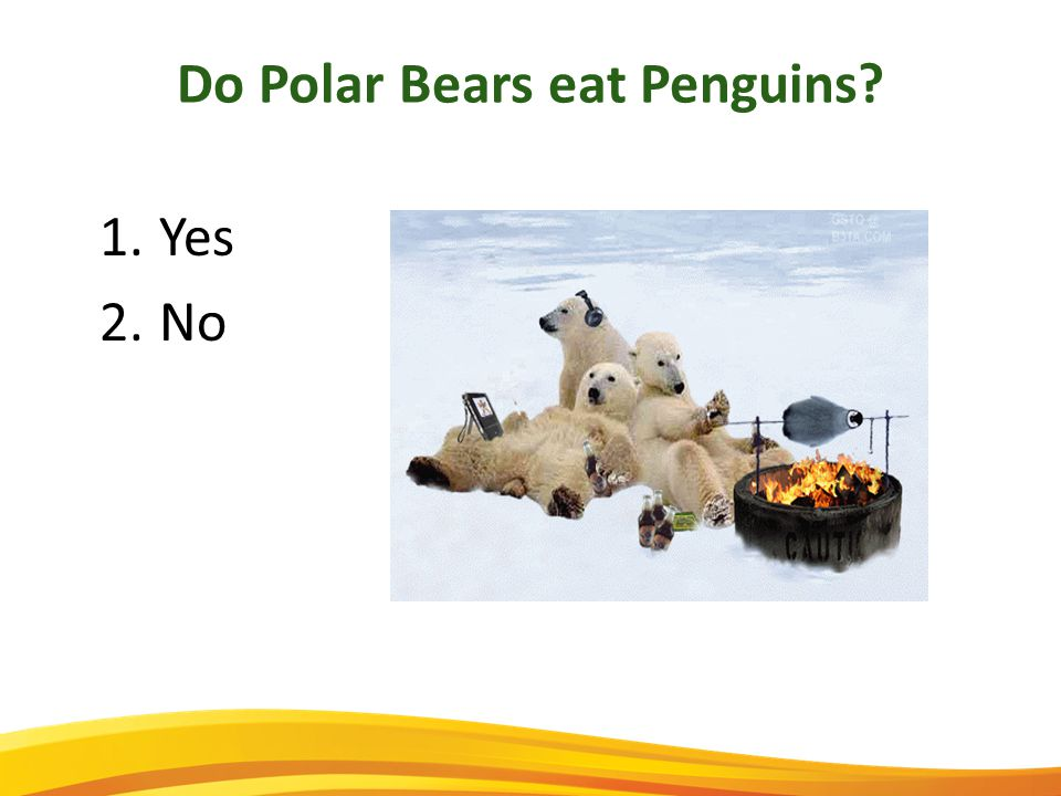 Do Polar Bears eat Penguins 1.Yes 2.No