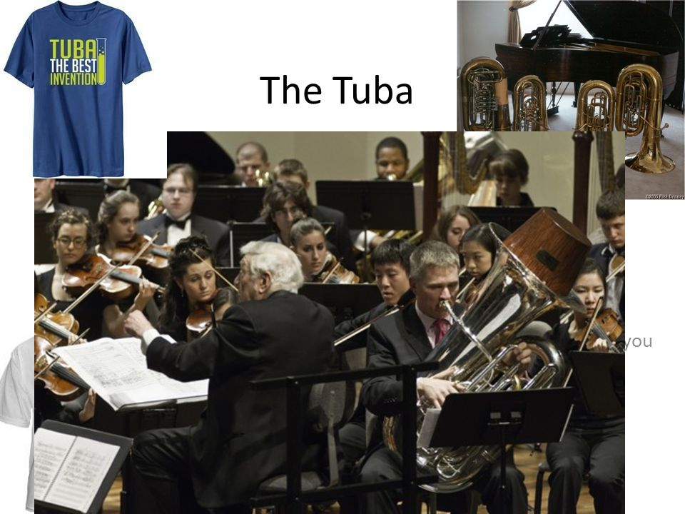 """The Tuba Fun Fact Tubas are the largest and lowest of the brass instruments. The first Friday in May is known as 'International Tuba Day"""" An orchestra"""