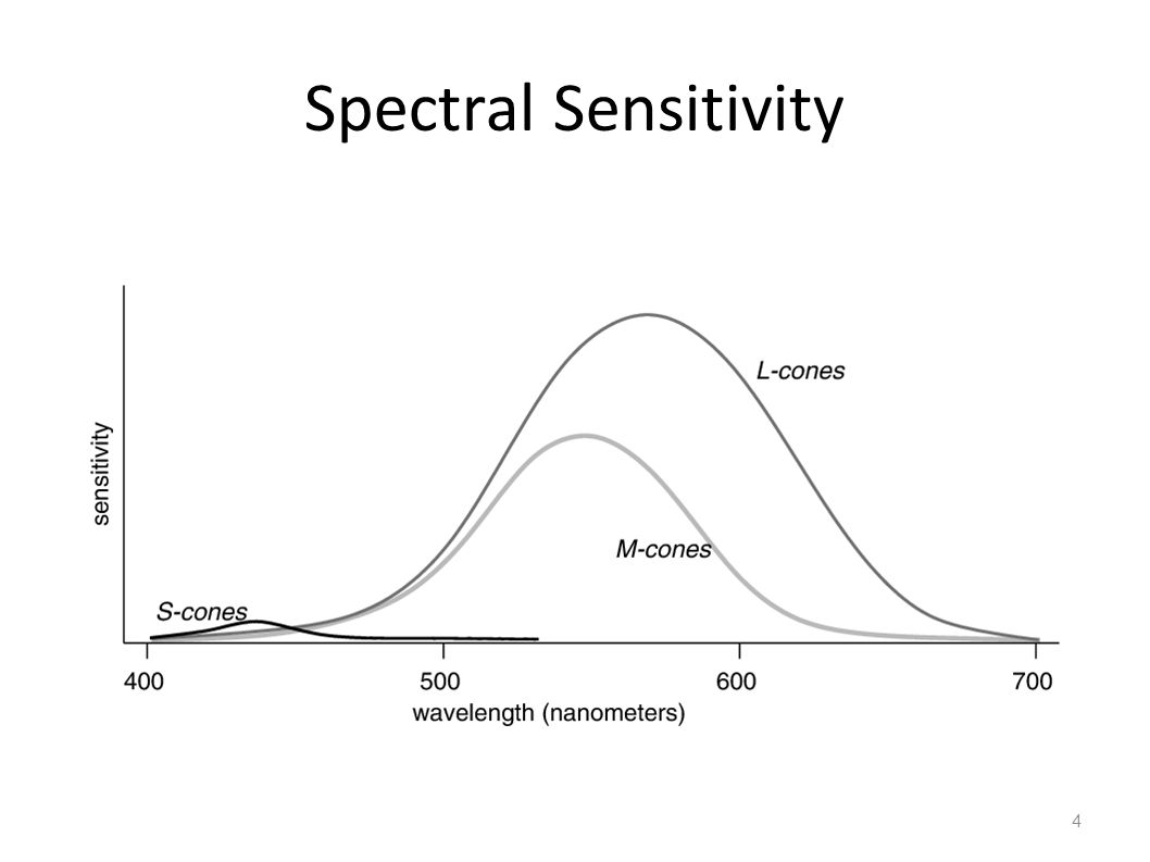 Spectral Sensitivity 4