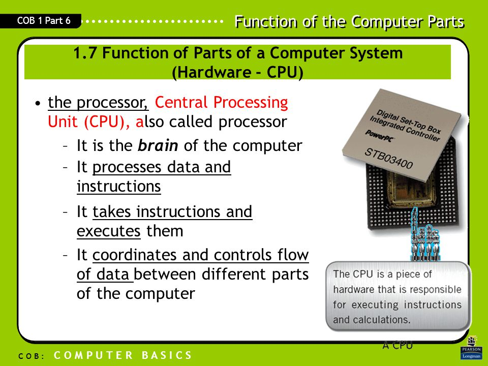 Function of the Computer Parts C O B : C O M P U T E R B A S I C S COB 1 Part 6 the processor, Central Processing Unit (CPU), also called processor br