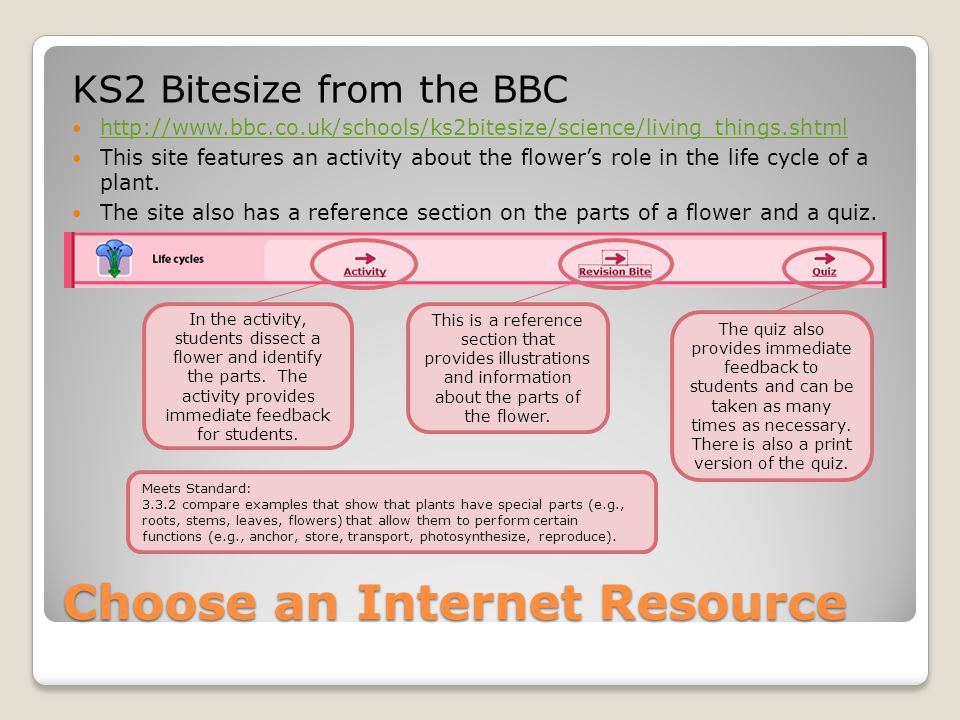 Choose an Internet Resource KS2 Bitesize from the BBC http://www.bbc.co.uk/schools/ks2bitesize/science/living_things.shtml This site features an activity about the flower's role in the life cycle of a plant.