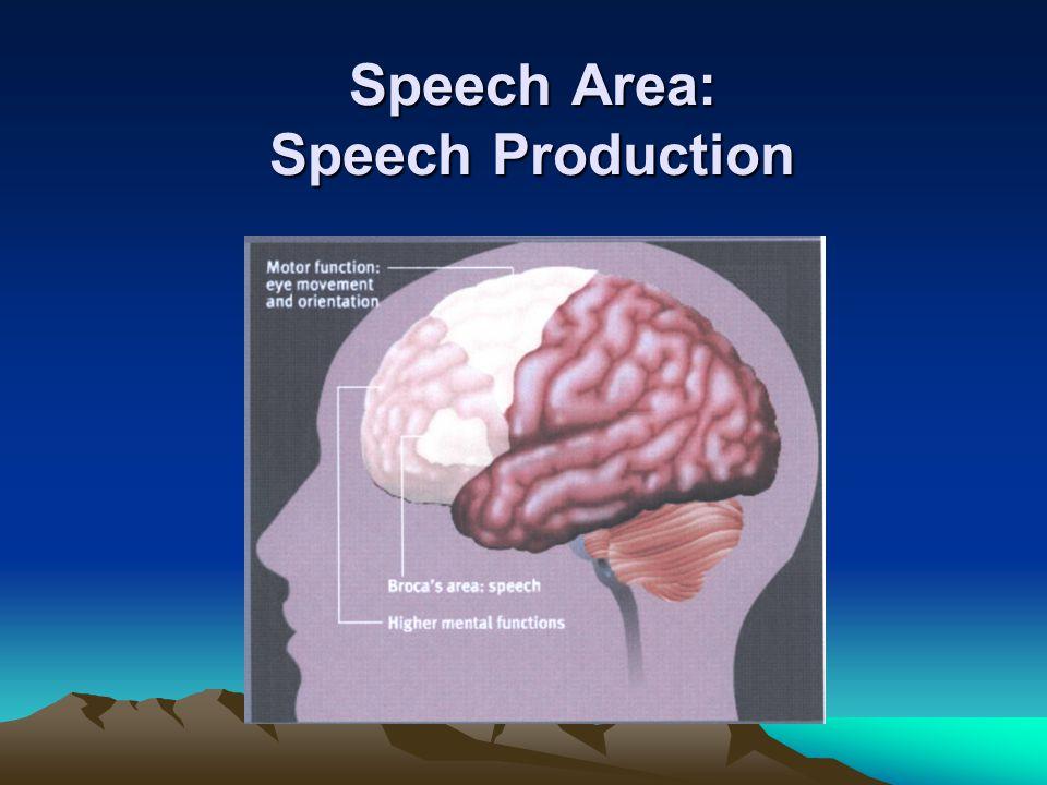 Speech Area: Speech Production