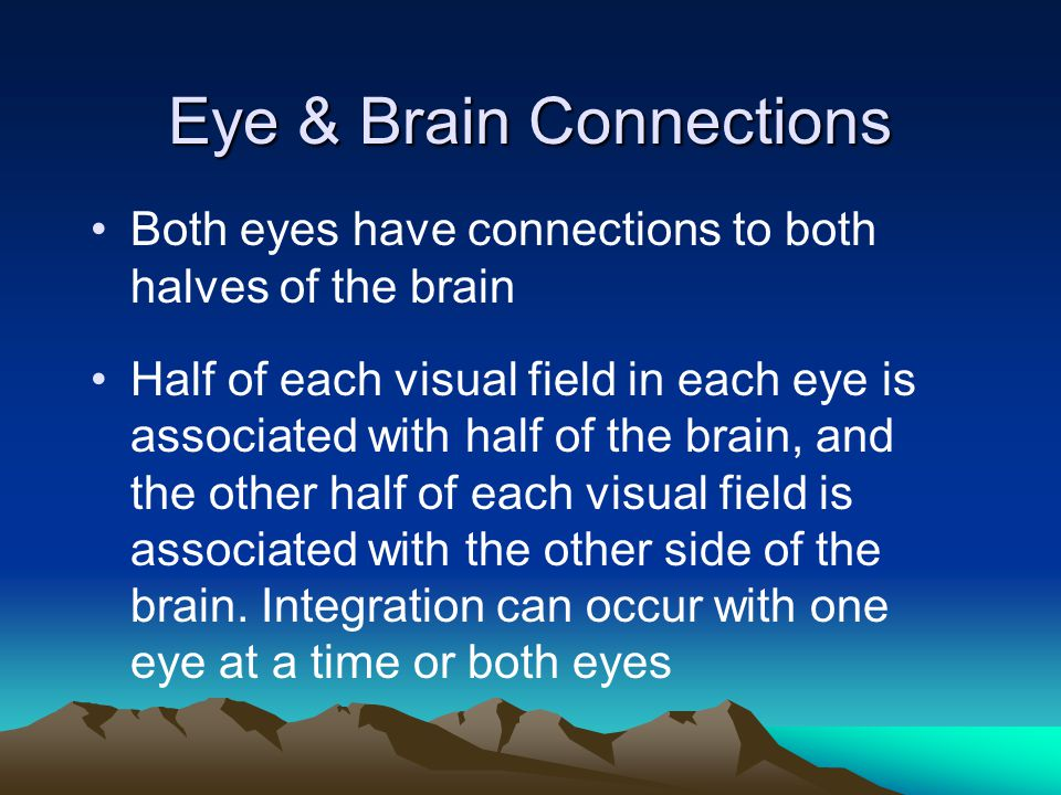 Eye & Brain Connections Both eyes have connections to both halves of the brain Half of each visual field in each eye is associated with half of the br