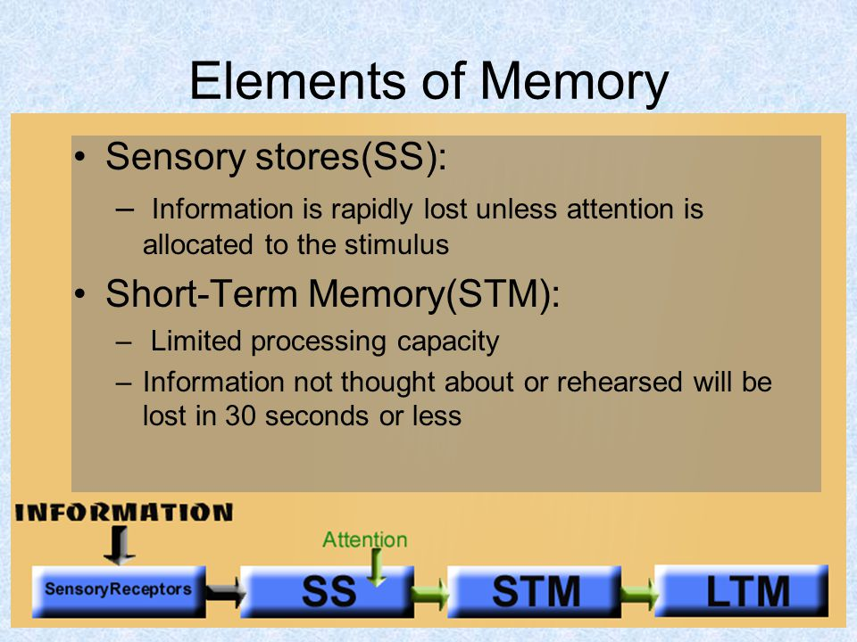 22 Elements of Memory Sensory stores(SS): – Information is rapidly lost unless attention is allocated to the stimulus Short-Term Memory(STM): – Limited processing capacity –Information not thought about or rehearsed will be lost in 30 seconds or less