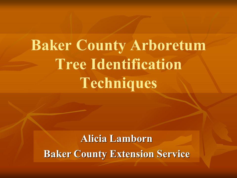 Baker County Arboretum Tree Identification Techniques Alicia Lamborn Baker County Extension Service