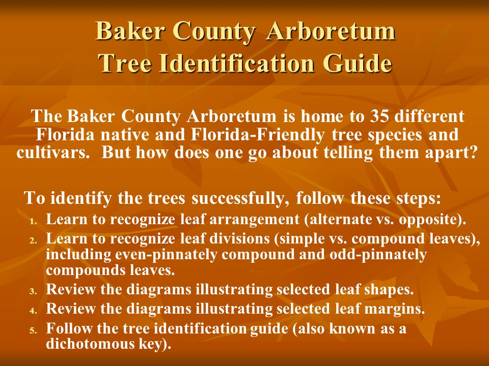Baker County Arboretum Tree Identification Guide The Baker County Arboretum is home to 35 different Florida native and Florida-Friendly tree species and cultivars.