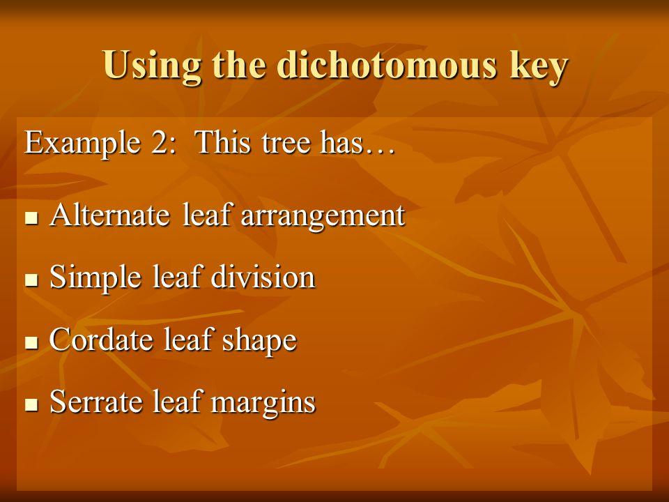Using the dichotomous key Example 2: This tree has… Alternate leaf arrangement Alternate leaf arrangement Simple leaf division Simple leaf division Cordate leaf shape Cordate leaf shape Serrate leaf margins Serrate leaf margins