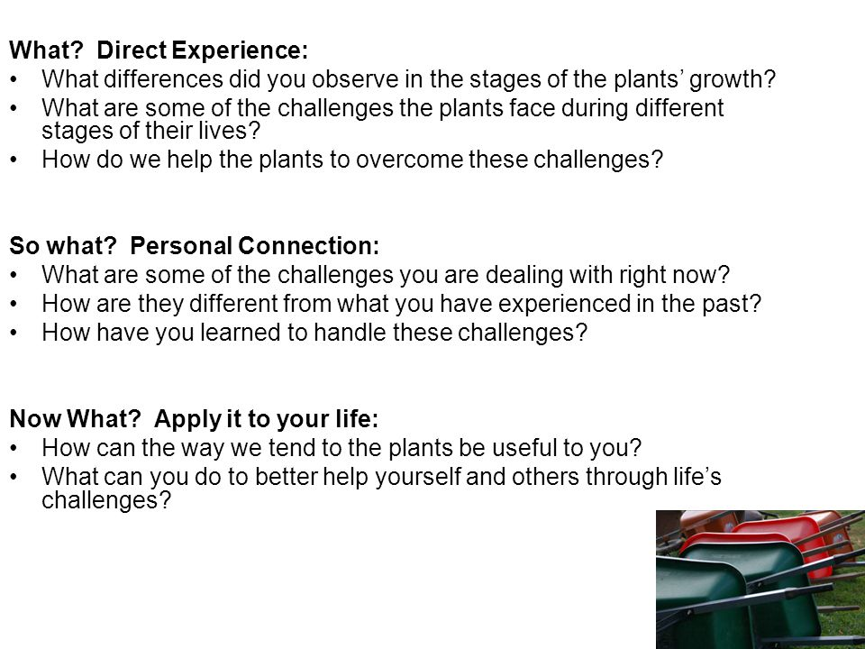 What. Direct Experience: What differences did you observe in the stages of the plants' growth.