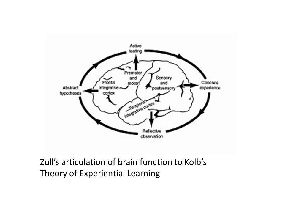 Zull's articulation of brain function to Kolb's Theory of Experiential Learning
