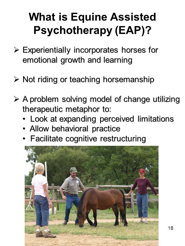 16 What is Equine Assisted Psychotherapy (EAP)?  Experientially incorporates horses for emotional growth and learning  Not riding or teaching horsem
