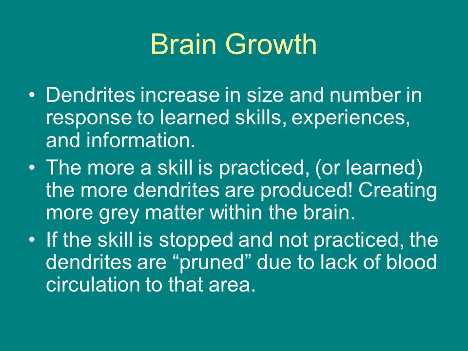 Brain Growth Dendrites increase in size and number in response to learned skills, experiences, and information.