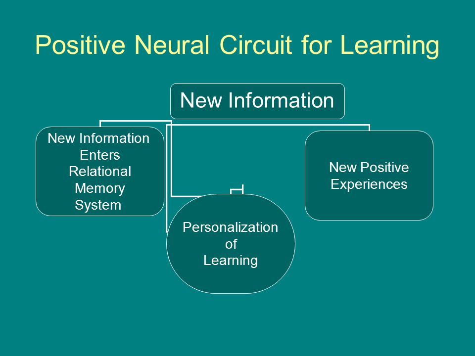 Positive Neural Circuit for Learning New Information Enters Relational Memory System Personalization of Learning New Positive Experiences New Information