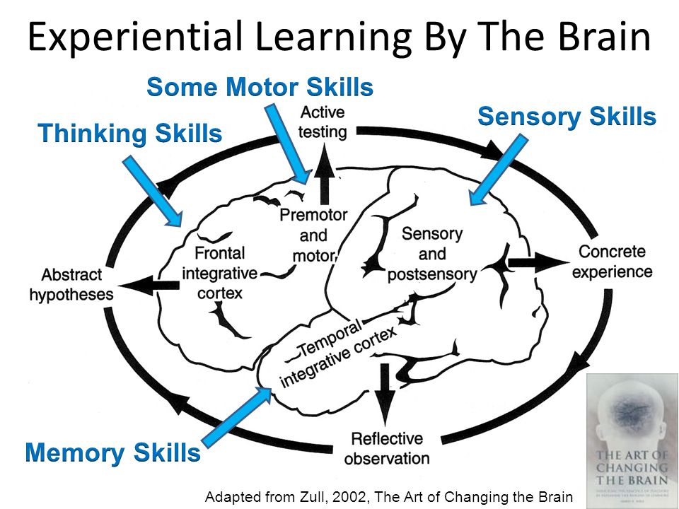 Experiential Learning By The Brain 36 Adapted from Zull, 2002, The Art of Changing the Brain