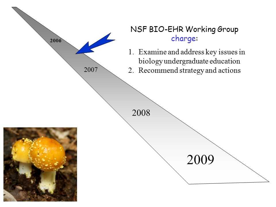 2006 2007 2008 2009 NSF BIO-EHR Working Group charge: 1.Examine and address key issues in biology undergraduate education 2.Recommend strategy and act