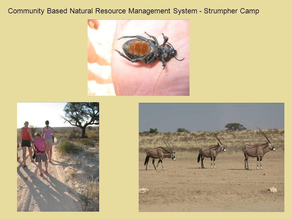 Community Based Natural Resource Management System - Strumpher Camp