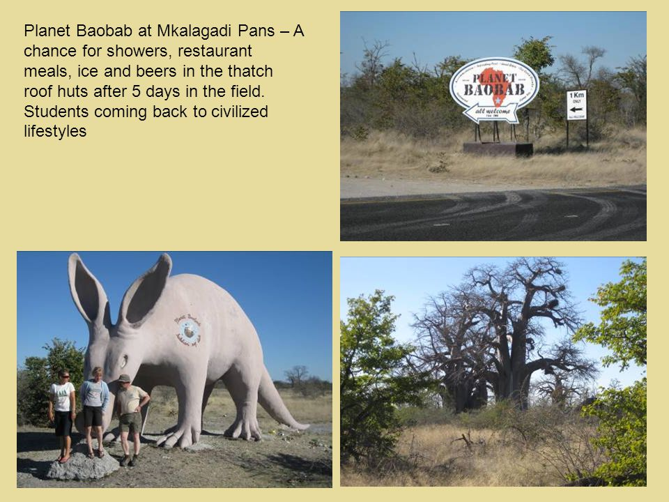 Planet Baobab at Mkalagadi Pans – A chance for showers, restaurant meals, ice and beers in the thatch roof huts after 5 days in the field.