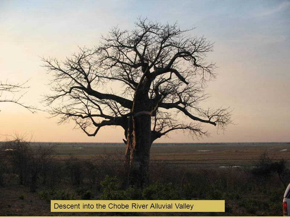 Descent into the Chobe River Alluvial Valley
