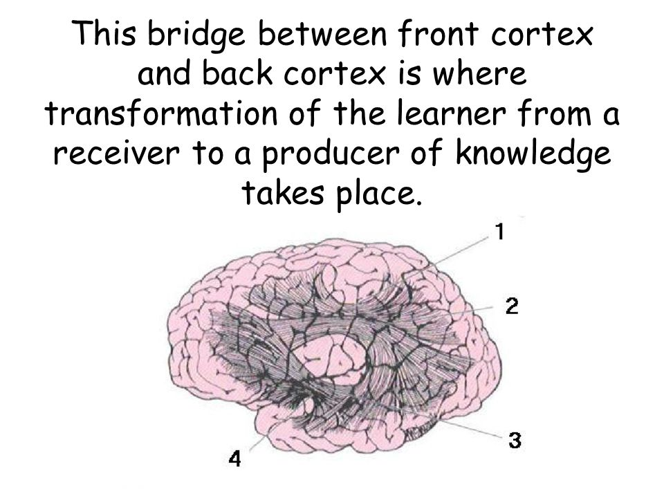 This bridge between front cortex and back cortex is where transformation of the learner from a receiver to a producer of knowledge takes place.