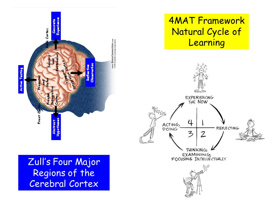4MAT Framework Natural Cycle of Learning Zull's Four Major Regions of the Cerebral Cortex