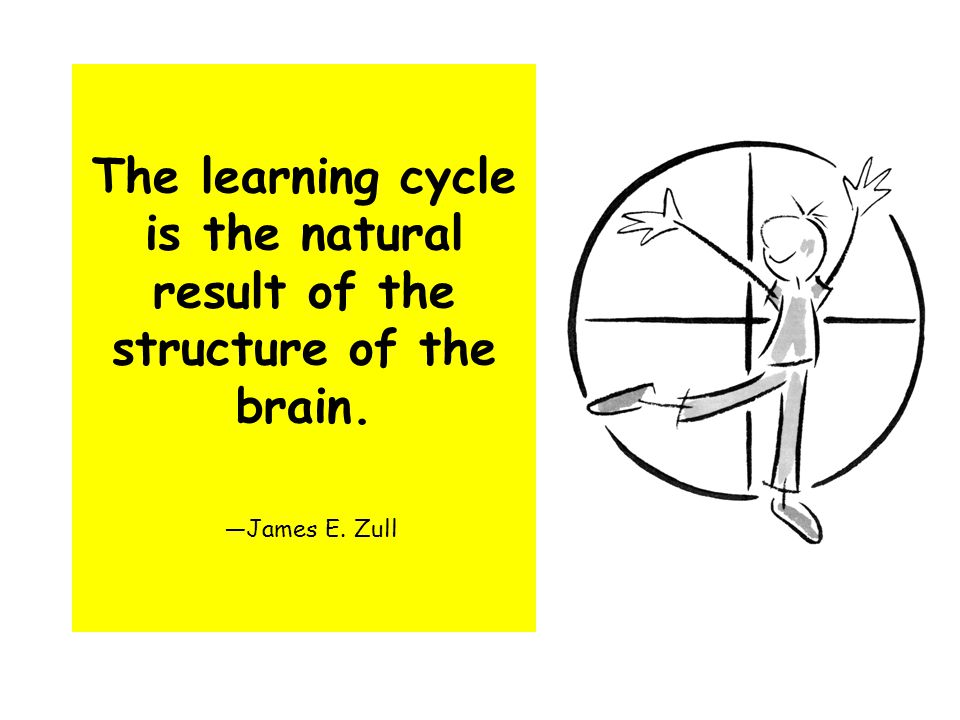 The learning cycle is the natural result of the structure of the brain. —James E. Zull