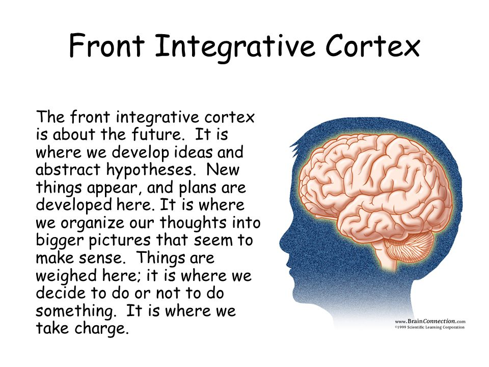 Front Integrative Cortex The front integrative cortex is about the future.