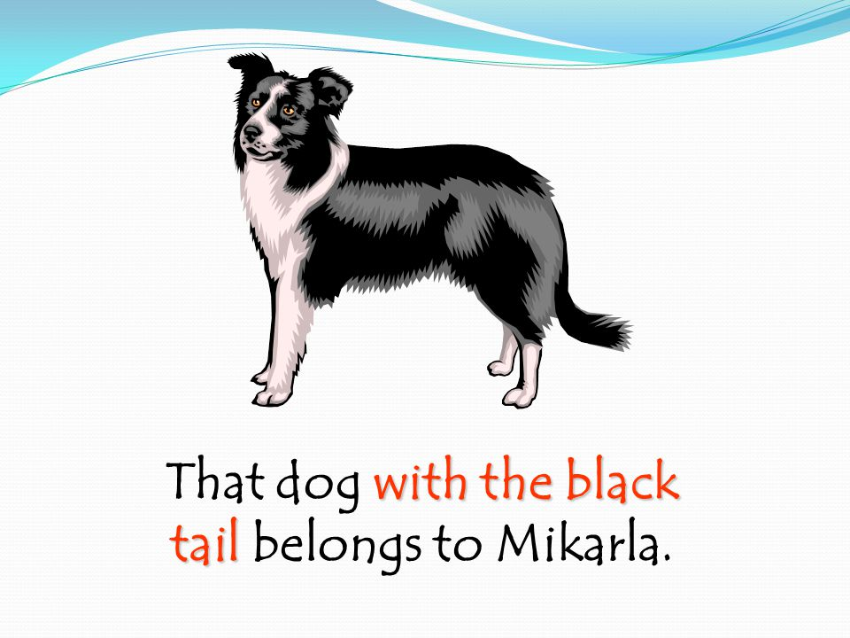 with the black That dog with the black tail tail belongs to Mikarla.