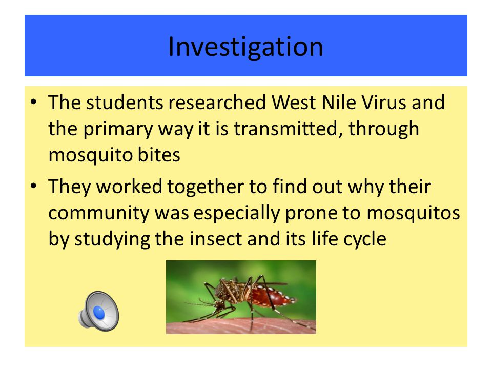 Investigation The students researched West Nile Virus and the primary way it is transmitted, through mosquito bites They worked together to find out why their community was especially prone to mosquitos by studying the insect and its life cycle