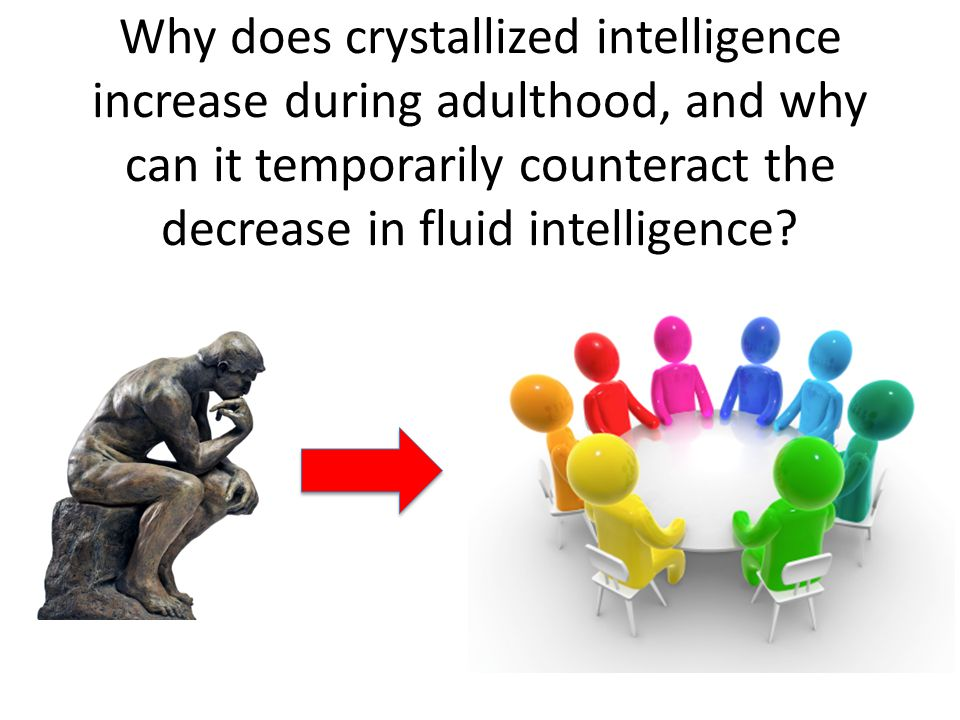 Why does crystallized intelligence increase during adulthood, and why can it temporarily counteract the decrease in fluid intelligence?
