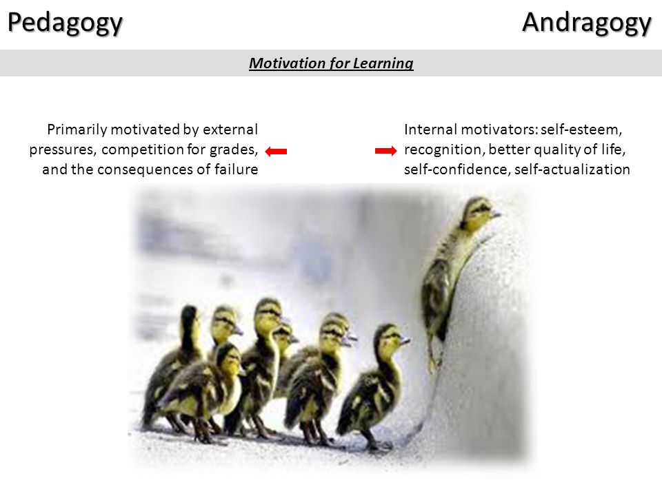 Andragogy Adults are internally motivated* Adults have specific reasons for engaging* Adults bring life experience to their learning activities