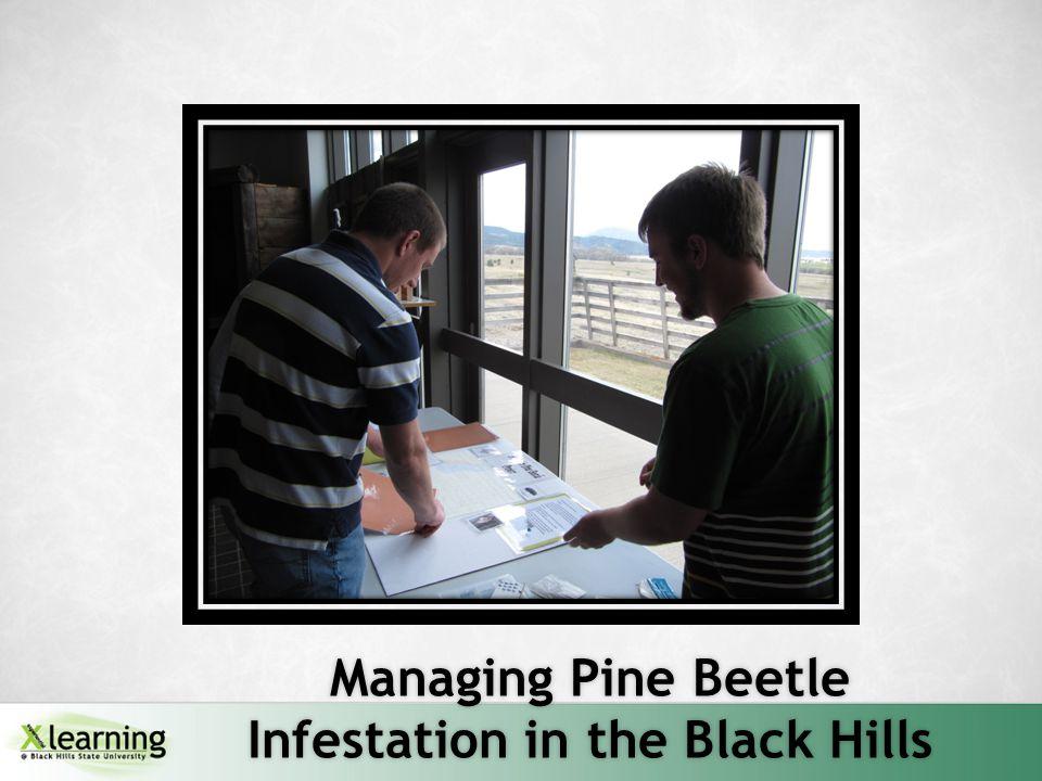 Managing Pine Beetle Infestation in the Black Hills