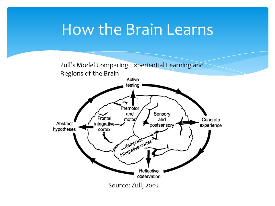 How the Brain Learns Zull's Model Comparing Experiential Learning and Regions of the Brain Source: Zull, 2002