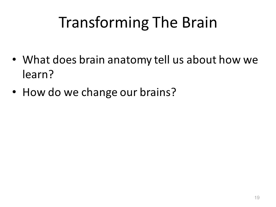 Transforming The Brain What does brain anatomy tell us about how we learn.
