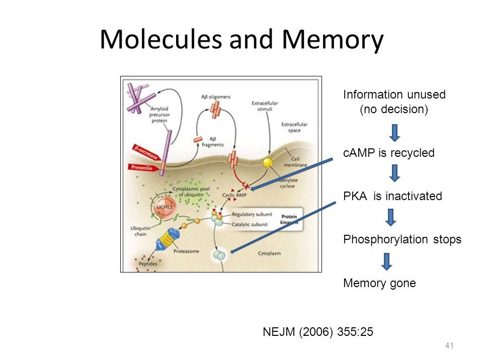 41 Molecules and Memory NEJM (2006) 355:25 Information unused (no decision) cAMP is recycled PKA is inactivated Phosphorylation stops Memory gone