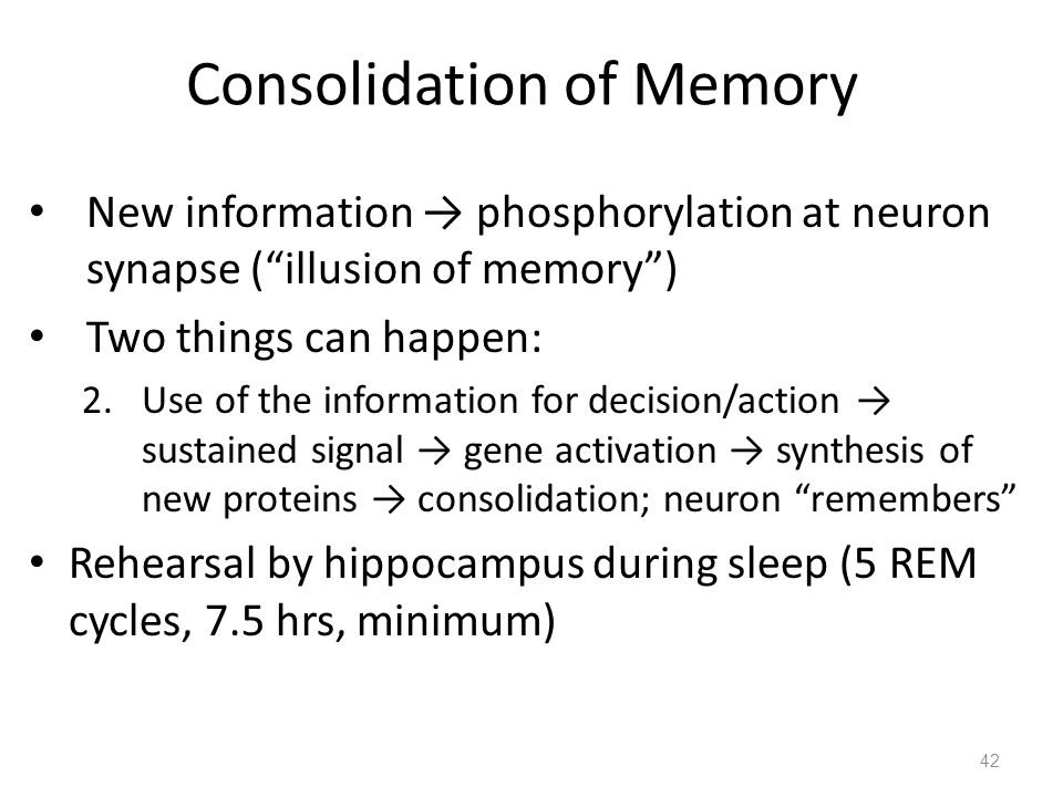 42 Consolidation of Memory New information → phosphorylation at neuron synapse ( illusion of memory ) Two things can happen: 2.Use of the information for decision/action → sustained signal → gene activation → synthesis of new proteins → consolidation; neuron remembers Rehearsal by hippocampus during sleep (5 REM cycles, 7.5 hrs, minimum)