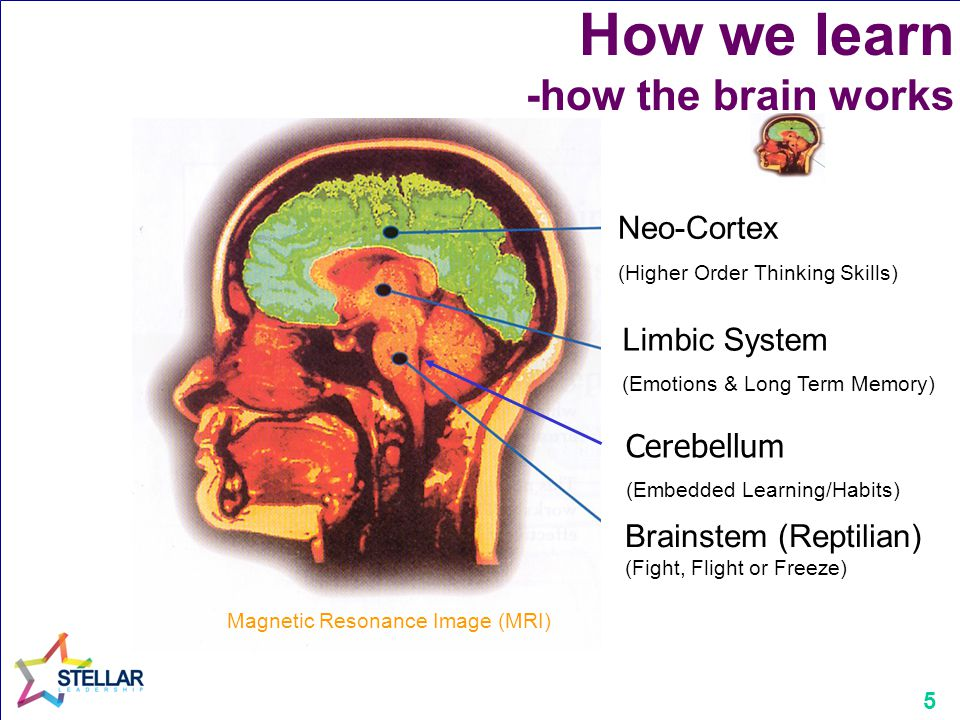 5 How we learn -how the brain works Neo-Cortex (Higher Order Thinking Skills) Limbic System (Emotions & Long Term Memory) Brainstem (Reptilian) (Fight, Flight or Freeze) Magnetic Resonance Image (MRI) Cerebellum (Embedded Learning/Habits)
