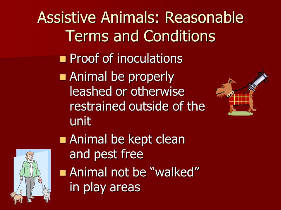 Assistive Animals: Reasonable Terms and Conditions Proof of inoculations Proof of inoculations Animal be properly leashed or otherwise restrained outside of the unit Animal be properly leashed or otherwise restrained outside of the unit Animal be kept clean and pest free Animal be kept clean and pest free Animal not be walked in play areas Animal not be walked in play areas