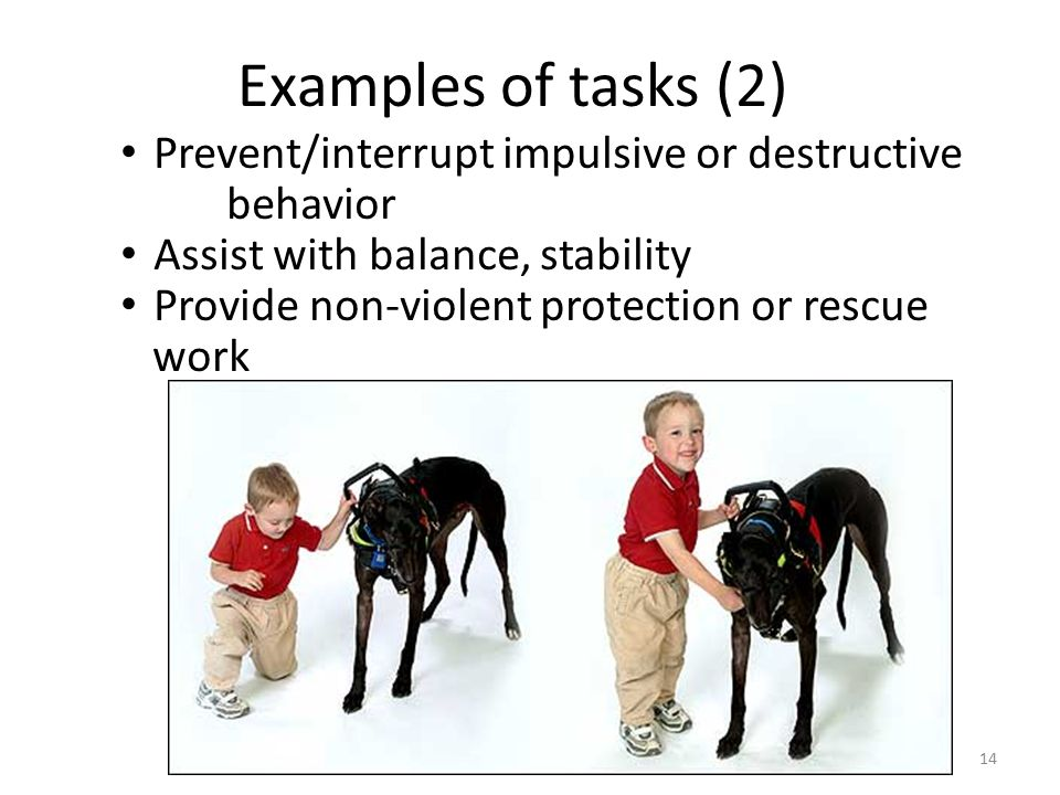 14 Examples of tasks (2) Prevent/interrupt impulsive or destructive behavior Assist with balance, stability Provide non-violent protection or rescue work