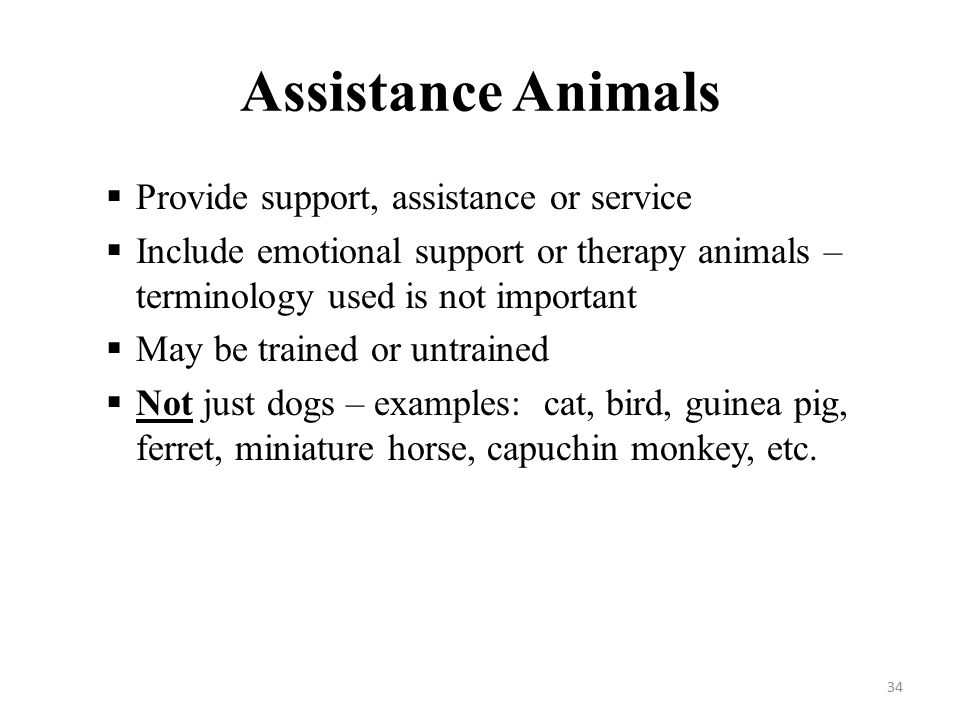 Assistance Animals  Provide support, assistance or service  Include emotional support or therapy animals – terminology used is not important  May be trained or untrained  Not just dogs – examples: cat, bird, guinea pig, ferret, miniature horse, capuchin monkey, etc.