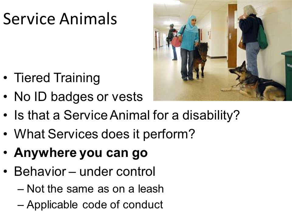 Service Animals Tiered Training No ID badges or vests Is that a Service Animal for a disability.