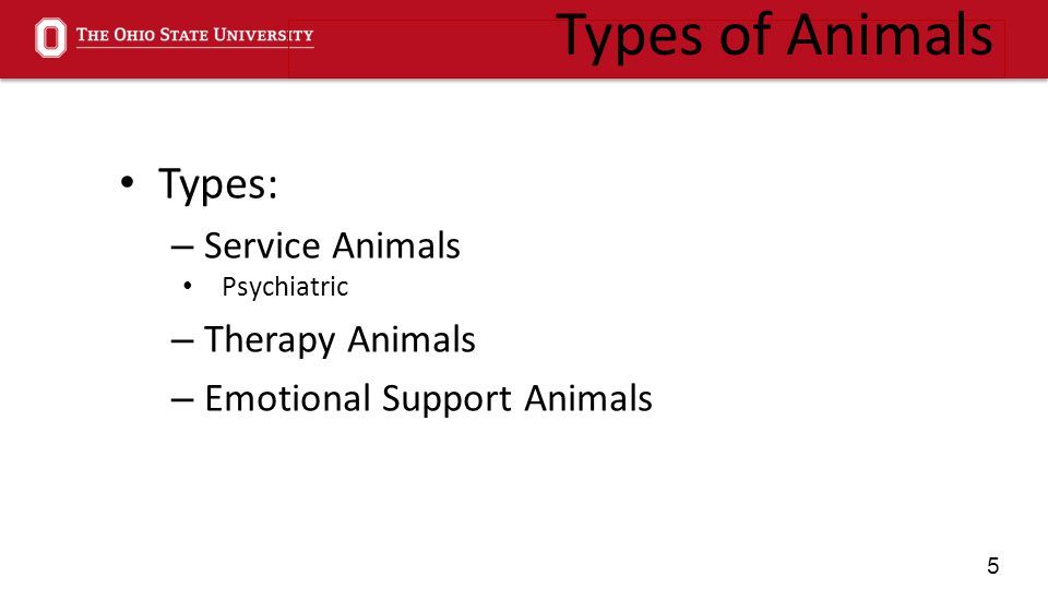 5 Types of Animals Types: – Service Animals Psychiatric – Therapy Animals – Emotional Support Animals
