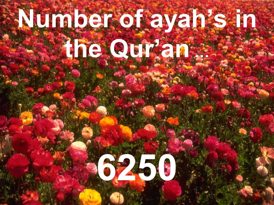 Number of ayah's in the Qur'an … 6250