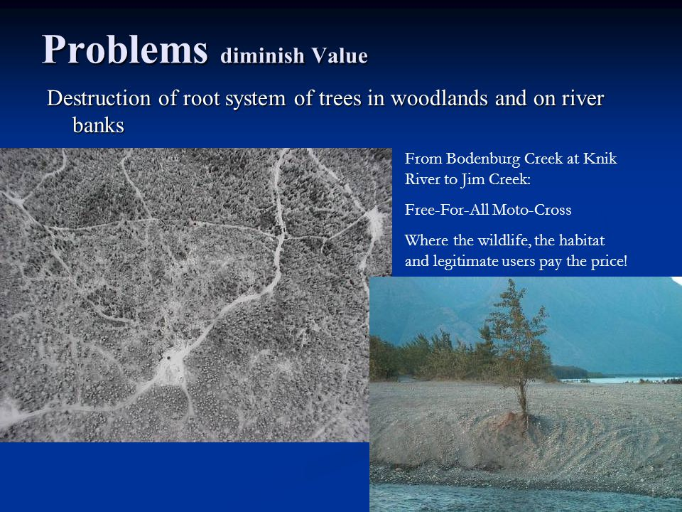 Problems diminish Value Destruction of root system of trees in woodlands and on river banks From Bodenburg Creek at Knik River to Jim Creek: Free-For-All Moto-Cross Where the wildlife, the habitat and legitimate users pay the price!