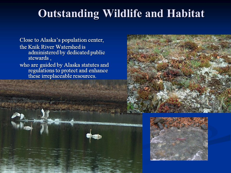 Outstanding Wildlife and Habitat Outstanding Wildlife and Habitat Close to Alaska's population center, the Knik River Watershed is administered by dedicated public stewards, who are guided by Alaska statutes and regulations to protect and enhance these irreplaceable resources.