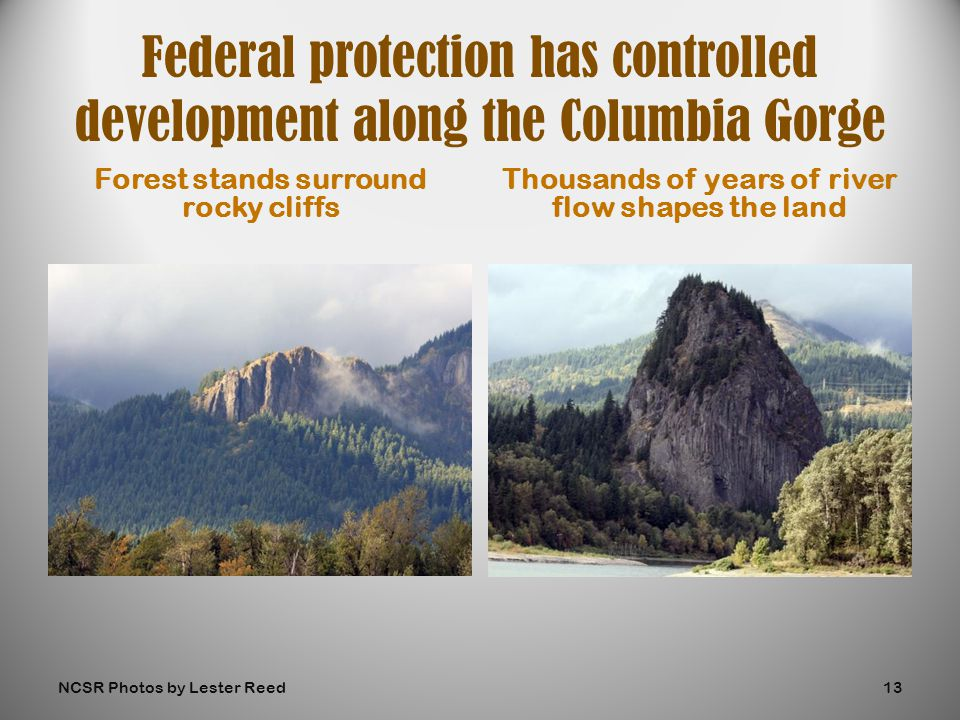 Forest stands surround rocky cliffs Thousands of years of river flow shapes the land Federal protection has controlled development along the Columbia Gorge NCSR Photos by Lester Reed13