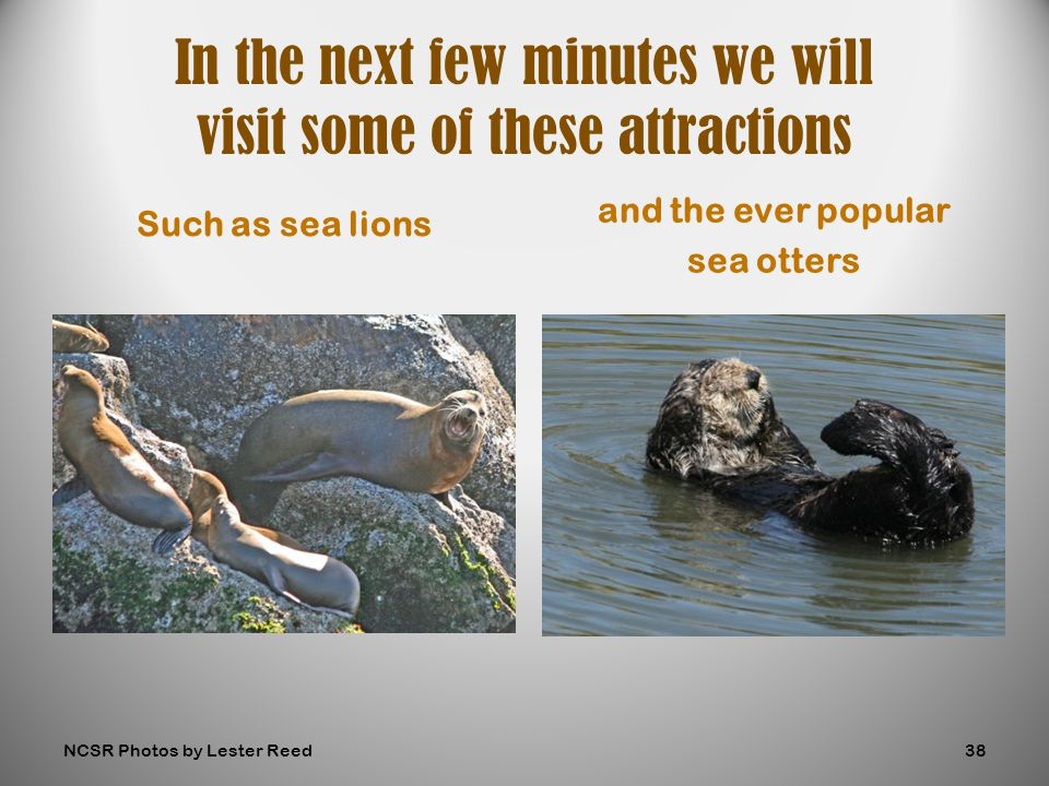 Such as sea lions and the ever popular sea otters In the next few minutes we will visit some of these attractions NCSR Photos by Lester Reed38