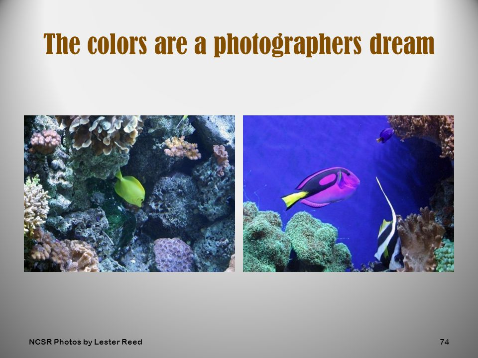 The colors are a photographers dream NCSR Photos by Lester Reed74
